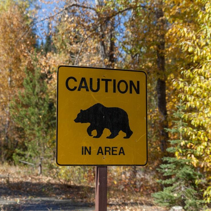 Let op! Beren in de regio camperrondreis in Canada