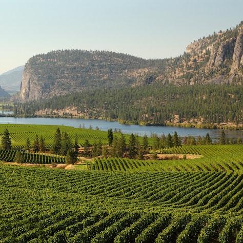 Okanagan Valley Wijngaard, British Columbia