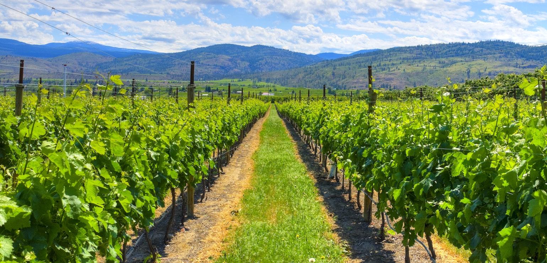 Wijnvelden in Osoyoos