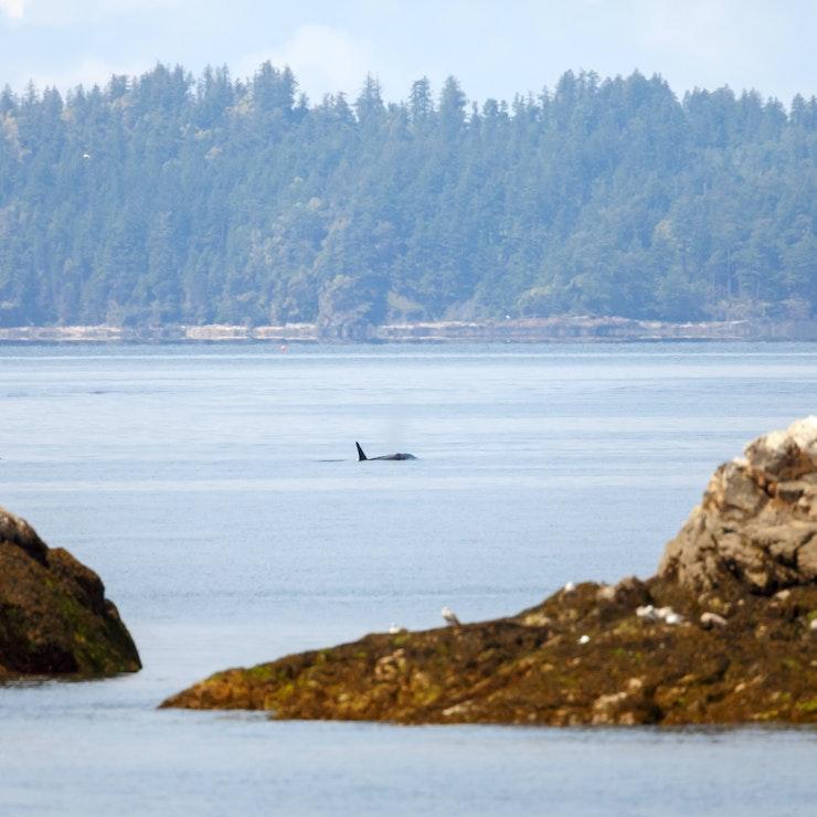Vakantie Vancouver Island