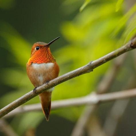 Fly-en-drive reis in West-Canada vogel