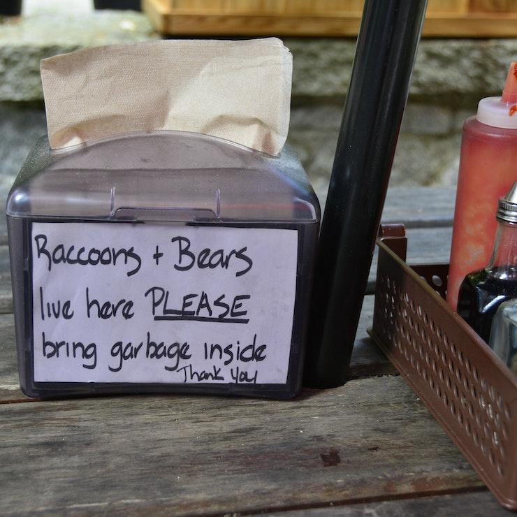 Vakantie naar West-Canada Raccoons & Bears