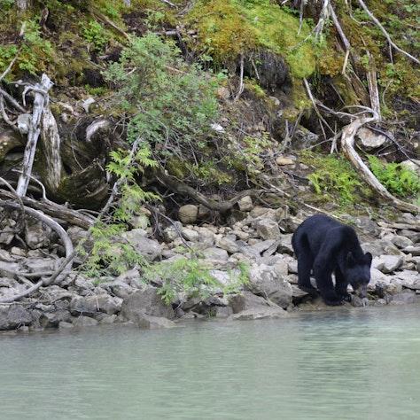 Beer Blue River British Columbia