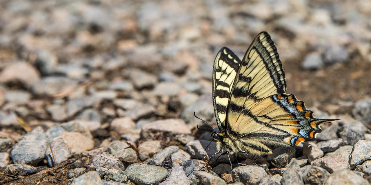 Vlinder, foto: Bas van den Hoorn