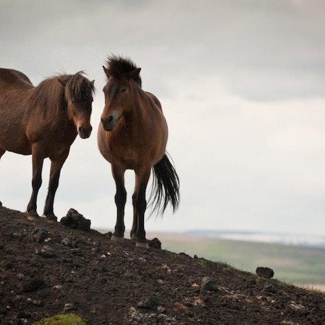 Paardrijden Northern exposure, IJsland