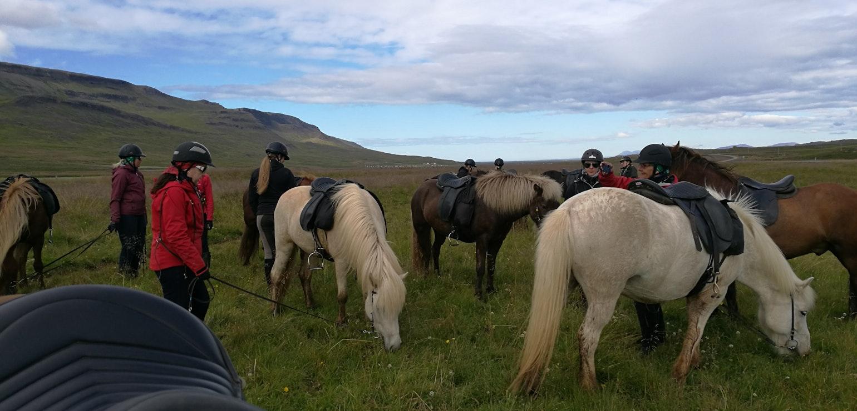 Paardrijden Trail of hope, IJsland