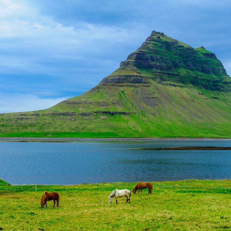 Kirkjufell met IJslandse paarden
