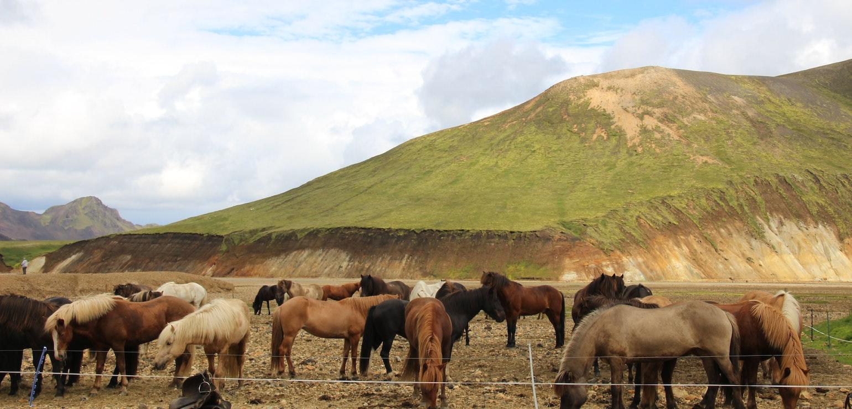 Paardrijden Landmannalaugar, paardrijvakantie op IJsland