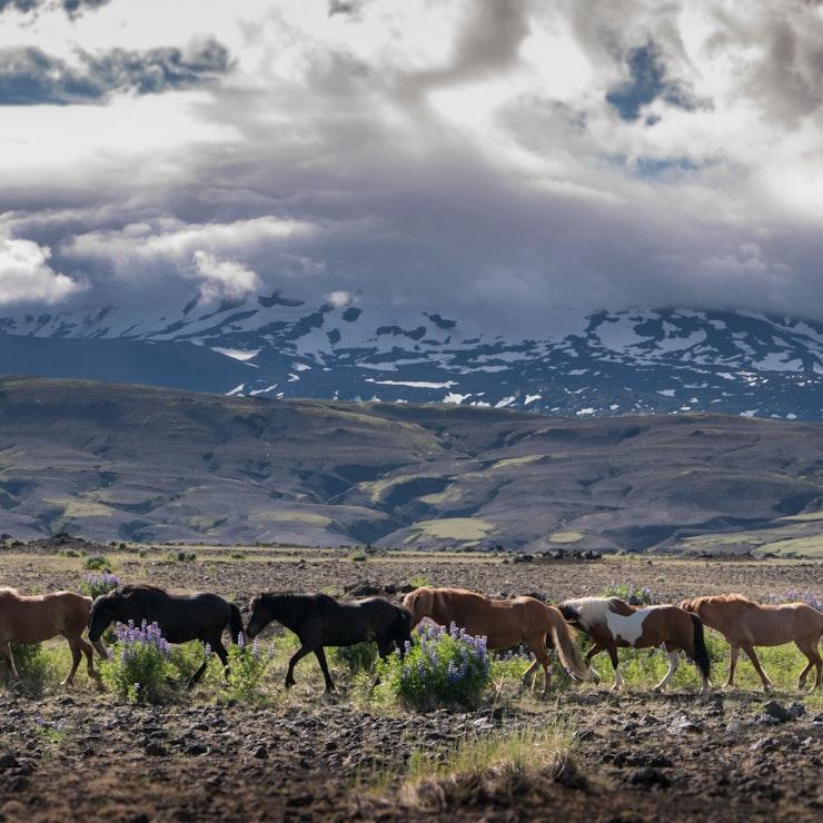 Paardrijdvakantie op IJsland Landmannalaugar