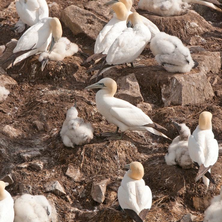 Vogels Newfoundland