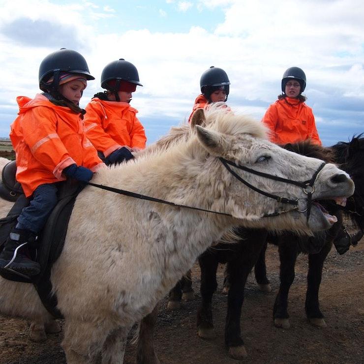 Paardrijden bij Hveragerði