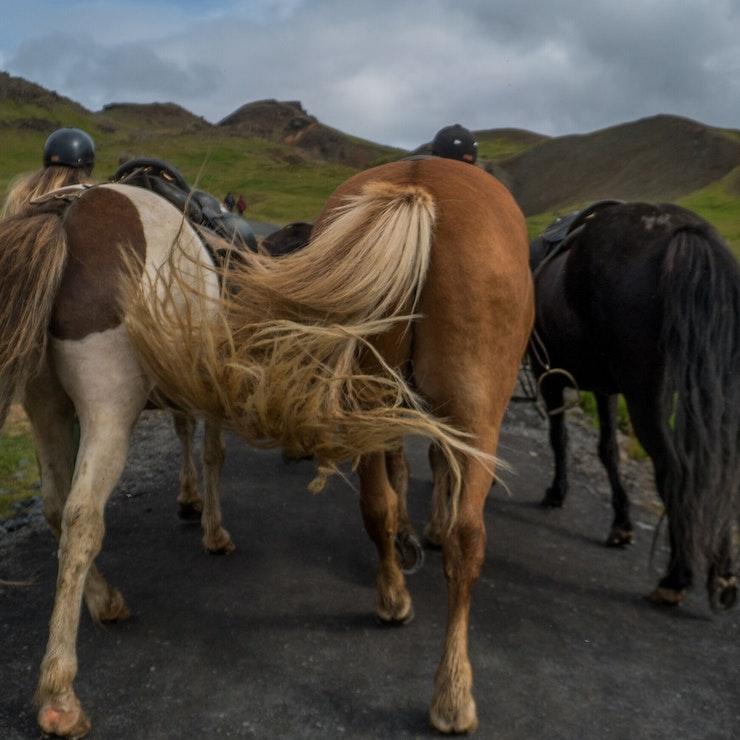 Paardrijvakantie op IJsland
