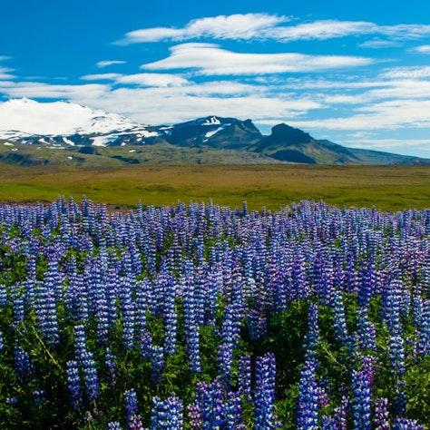 Uitzicht op de Snæfellsjökull