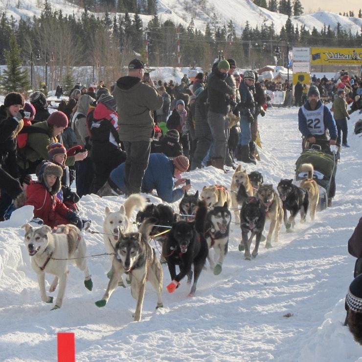 Hondenslede Yukon