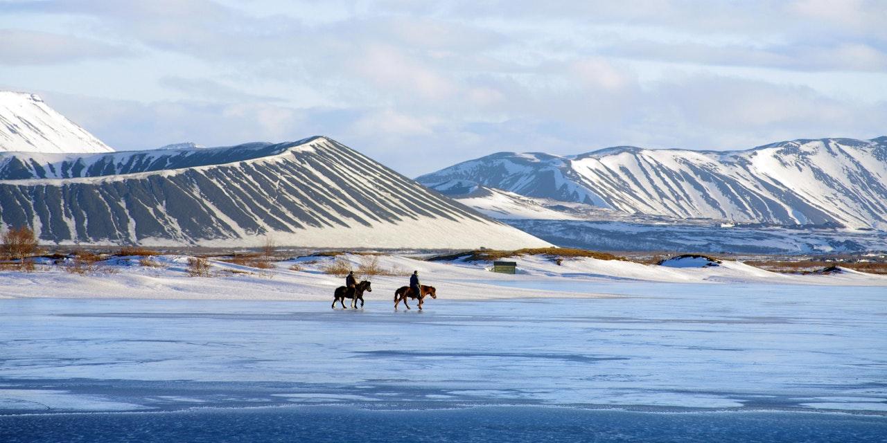 Paarden Noord-IJsland