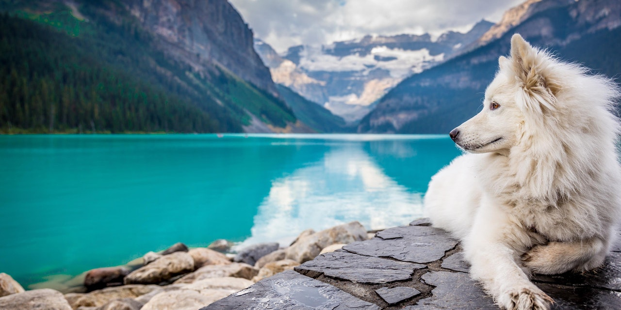 Hond Lake Louise, Banff Nationaal Park