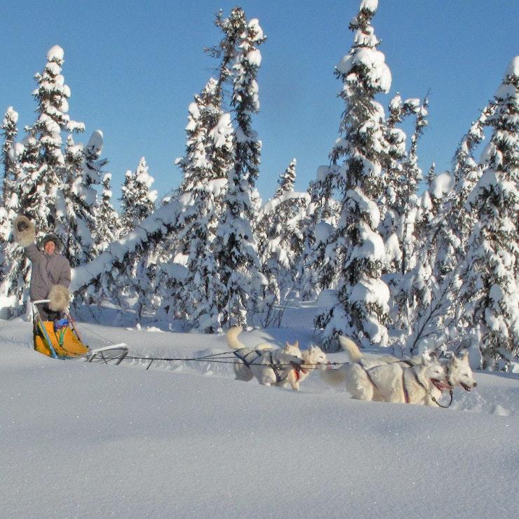 Dogsledding Yukon