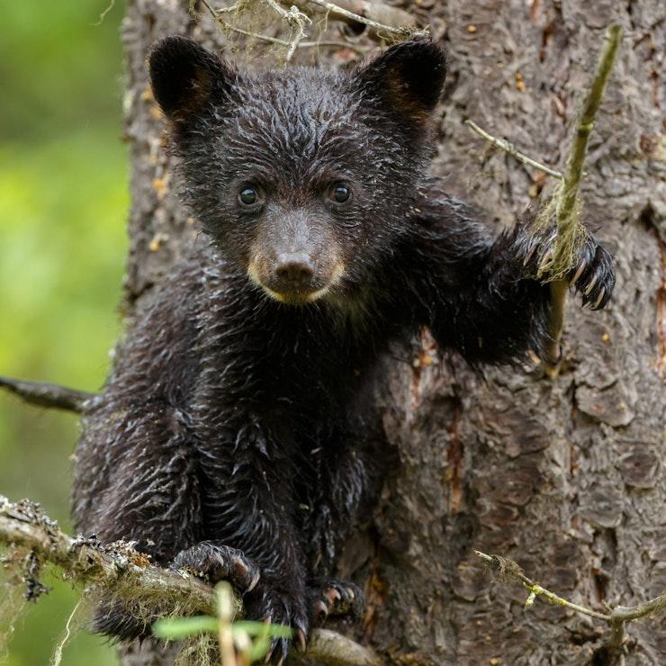 Jonge beer, foto: Menno Schaefer