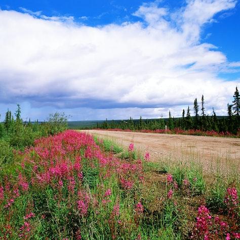 Dempster Highway, Yukon Canada