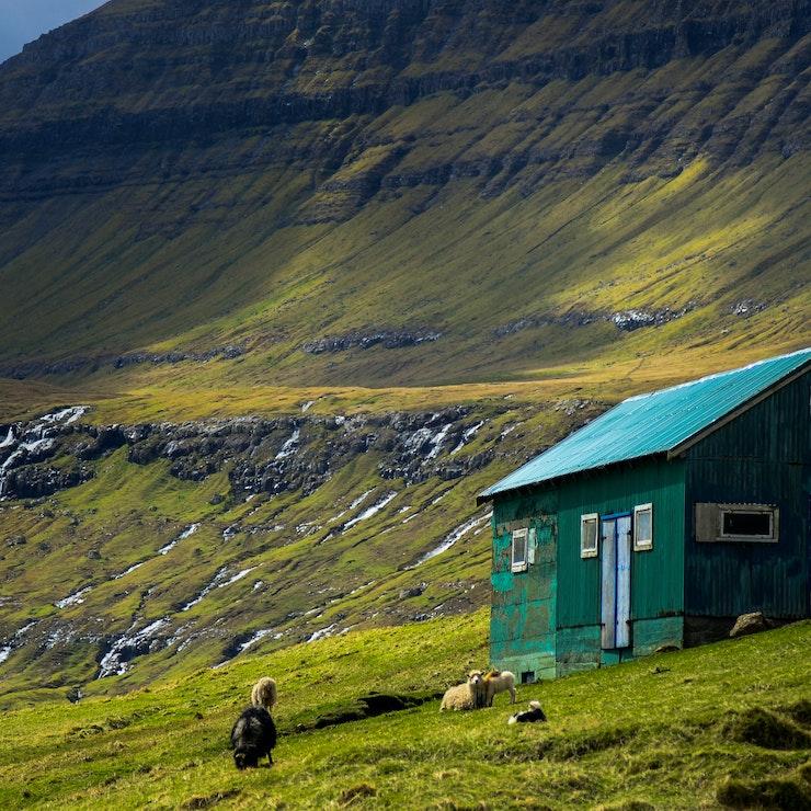 Huisje met schapen, Faeröer eilanden