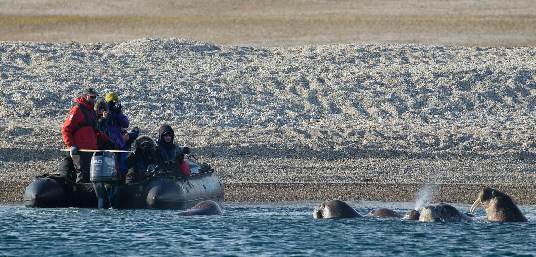 Zodiac cruising, wilde dieren spotten - Arjen Drost