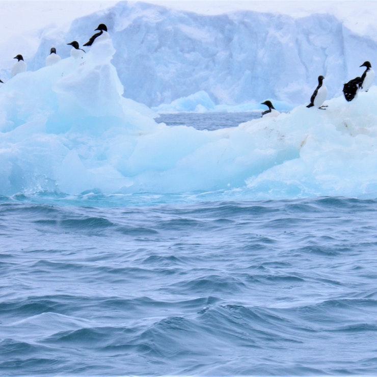 Vogels op gletsjer
