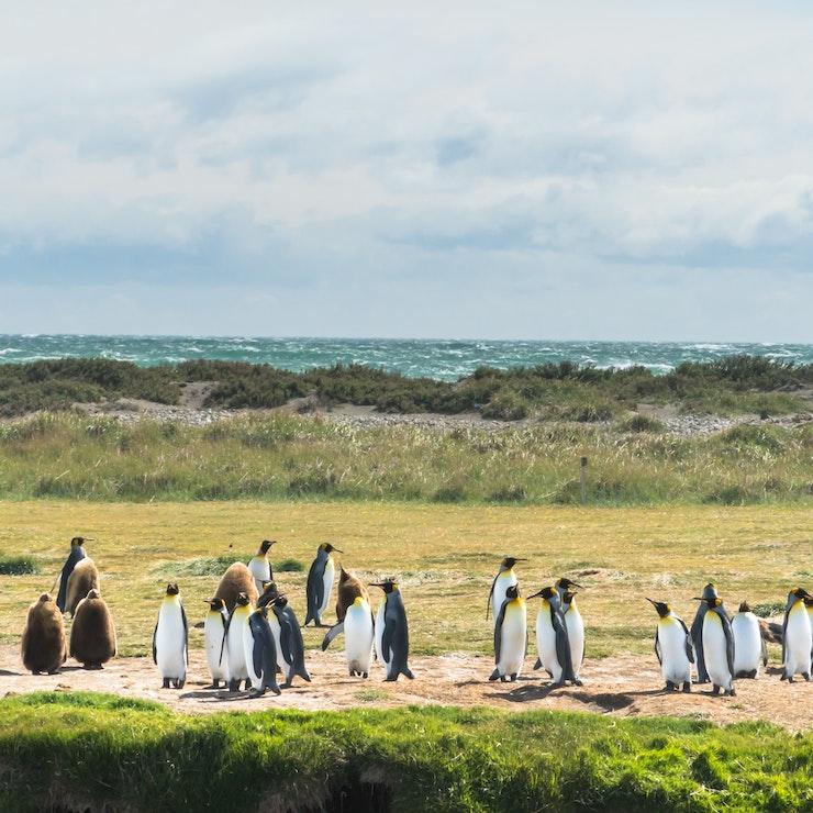 Pinguins, Ushuaia, Argentinië