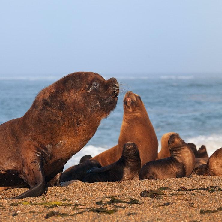 Puerto Madryn zeezoogdieren