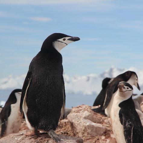 Pinguïns, reis naar Antarctica
