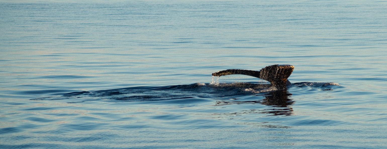 Walvissoorten, Antarctica