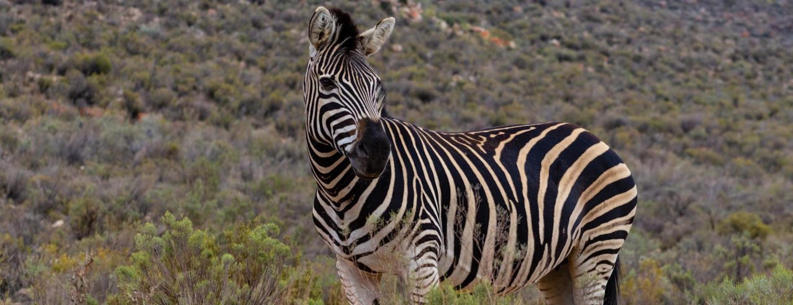 West Kaap