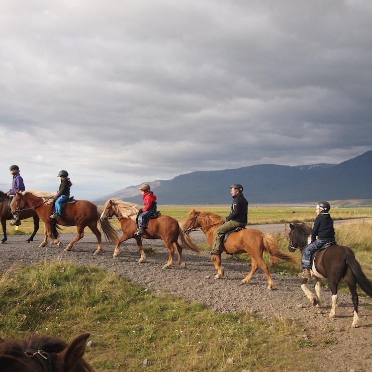 Paardrijden in IJsland