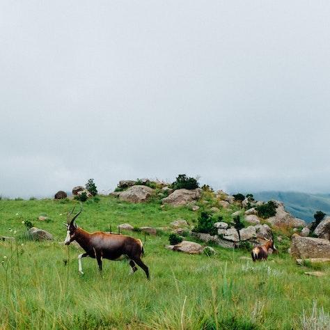 Swaziland National Park